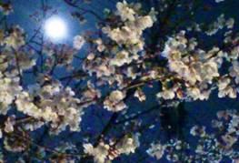 C:\Users\keijisatoan\AppData\Local\Microsoft\Windows\Temporary Internet Files\Content.Word\桜と月4.jpg